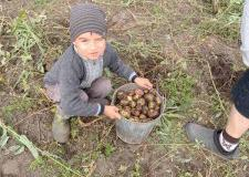 Фотоконкурс «Собираем урожай»